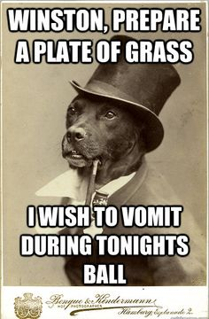 Old Money Dog. I find these hilarious. And it's a pittie!!!!