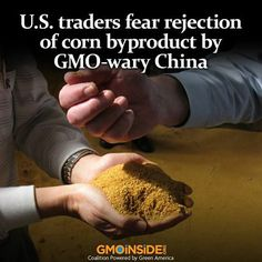 US Traders Fear Rejection Of Corn Byproduct By GMO-Wary China. More: http://www.reuters.com/article/2013/12/12/usa-china-ddgs-idUSL1N0JR1SF2013121