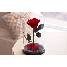 Beauty and the beast rose, forever rose, Enchanted Rose, Belle rose,... ($89) ❤ liked on Polyvore featuring home, home decor, handmade home decor, glass home decor, rose home decor and glass dome