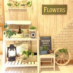 kohakuruさんの、玄関/入り口,植物,雑貨,スツール,100均,DIY,ランタン,カフェ風,セリア,salut!,車輪,いつもいいね!ありがとうございます♪,軽量レンガ,のお部屋写真