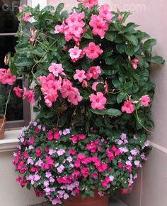 Unisexual flowers are present indicative spanish