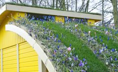 Ecotoit ou toit végétalisé : les plantes se mettent sur les toits