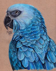May be a colored pencil drawing, perhaps some other media mixed in. Spix's Macaw.
