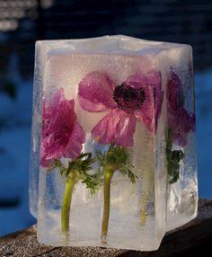 Nydelig islykt med blomster i! Stjerneform til islykt fås kjøpt på www.multitrend.no - gratis frakt!