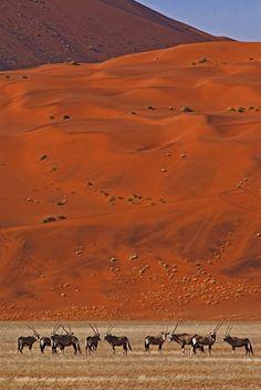 Sossuvlei by Konstantinos Arvanitopoulos on Oryx – Gemsbok Race (Oryx gazella), Namib-Naukluft National Park, Namibia, Africa Desert Dunes, Namib Desert, Paises Da Africa, Out Of Africa, South Africa, Beautiful World, Beautiful Places, Chobe National Park, Deserts Of The World