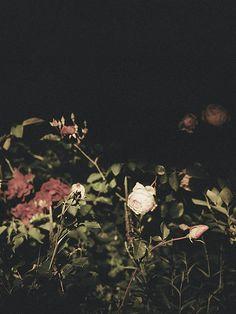 Allison Watkins | Reilluminate #3 (2014); Archival pigment print on rag paper (from film negative); 24 x 18 in (61 x 45.7 cm) #flowers #photography #photo #art