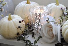My Shabby Streamside Studio: White Baby Boo Pumpkins