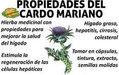 propiedades medicinales cardo mariano planta medicinal y sus beneficios