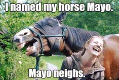 Ruining a perfect Kodak moment with a hilarious 'photobomb' is one of life's great joys. Animals know this all too well, with a collection of hysterical photos demonstrating their wild sense of humour Funny Horse Memes, Funny Horses, Funny Animal Memes, Funny Animal Pictures, Funny Cute, The Funny, Funny Animals, Cute Animals, Horse Quotes