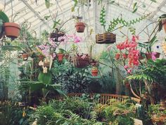 chixiro, hanahaley: went to the flower conservatory today