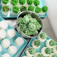 """""""Succulent soaps on the table. Getting ready for once last pour. We promise, the easiest plant you will ever care for! 😉🌿 #succulents #handmadesoap #sunbasilgarden"""" Teacher Christmas Gifts, Christmas Gifts For Her, Natural Bath Bombs, Parts Of A Flower, Succulent Gifts, Unique Gifts For Women, Spa Gifts, Home Made Soap, Handmade Soaps"""