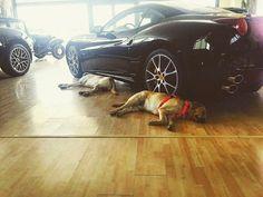 • RELAX • #fmcar#ferrari#california#ferraricalifornia#maserati#lamborghini#bentley#rollsroyce#porsche#mercedes#bmw#fiat#landrover#volkswagen#nissan#jeep #carsofinstagram#cars#dogs#showroom#cesenatico#rimini#milano. @ferrari http://blog.fmcarsrl.com/wp-content/uploads/2017/04/17882510_1836759846648723_821569296026042368_n.jpg http://blog.fmcarsrl.com/index.php/2017/04/14/%e2%80%a2-relax-%e2%80%a2-fmcarferraricaliforniaferraricaliforniamaseratilamborghinibentleyrollsroycepo