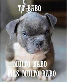 Engraçados– To babo,Muitobabo.