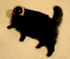 Funny cat - Bread face - Funny Pictures, Videos, Jokes, And More . Fat Cats, Cats And Kittens, Crazy Cat Lady, Crazy Cats, I Love Cats, Cool Cats, Kitten Baby, Funny Cats, Funny Animals