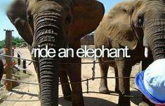 Montar un elefante