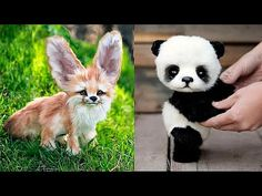 This is baby animals Funny Animal Videos, Funny Animals, Pet Videos, Kinds Of Penguins, All Godzilla Monsters, Baby Cheetahs, Cincinnati Zoo, Cute Little Animals, Shark Tank