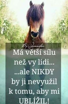 Jezdectví je více než sport je to pouto a důvěra mezi koňmi a lidmi Unique Animals, Cute Animals, Motto, Horse Love, Sad Quotes, Quotations, Horses, My Love, Pictures