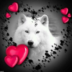 THIS IS FOR MY OLD FRIEND LORI HOMAN TERESA Wolf Photos, Wolf Pictures, Animal Pictures, Native American Images, American Indian Art, Spiritual Animal, Wolf Artwork, Horse Wallpaper, Wolf Painting