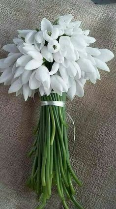 """If you declare with your mouth, """"Jesus is Lord,"""" and believe in your heart that God raised him from the dead, you will be saved. White Anemone, White Tulips, White Flowers, Beautiful Flowers, My Flower, Flower Vases, Flower Pots, Buddha Flower, Easter Wishes"""