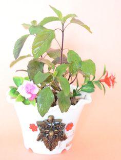 Holy Krishna Tulsi - Kapoor Tulsi (Live Plant) with Beautiful Ganesha Ji Pot and Decorative Materials + Laxmi ATM CARD Buy Plants, Live Plants, Tulasi Plant, Krishna Tulsi, Atm Card, Plants Online, Birthday Messages, Mom Birthday Gift, Outdoor Plants