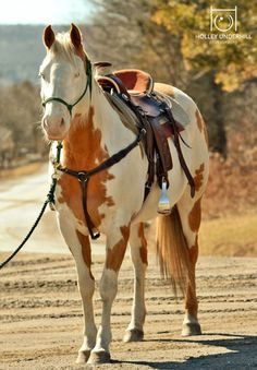either a sorrel or palomino paint horse with a bald face.all ready to trail ride! All The Pretty Horses, Beautiful Horses, Animals Beautiful, Cute Animals, Westerns, American Paint Horse, Types Of Horses, Western Riding, Equine Photography