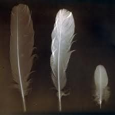 feathers - Google Search