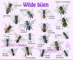 Determineren : Zoekkaarten & Links – Project Love For Bees Beauty And The Bees, Different Bees, Wild Bees, Bees Knees, Fauna, Bee Keeping, Outdoor Life, Life Is Beautiful, Garden Inspiration