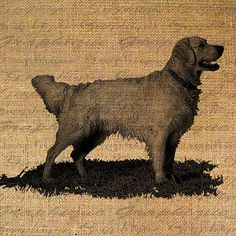 Golden Retriever Dog Puppy Canine Digital Image by Graphique, $1.00