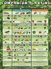 Southern California Garden Guide Basic Gardening Easy panion Planting Ve ables