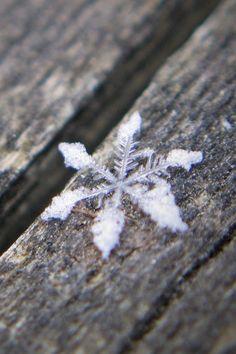 A winter snowflake