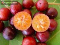Flacourtia jangomas / ameixa-de-cametá ou ameixa-de-madagascar