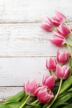 Pin By Wishes And Dreams On Spring Blooms In 2020 Floral Wallpaper Nature Iphone Wallpaper