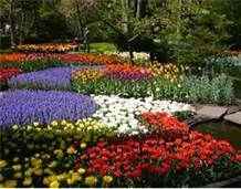 Flower Garden - Bing Images
