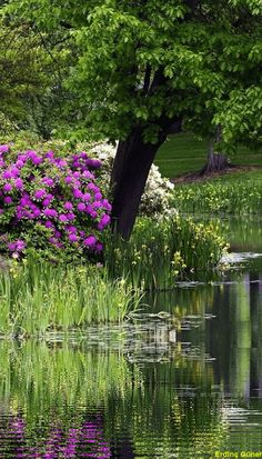 """""""The Ripple Effect. Beautiful Places To Visit, Beautiful World, Beautiful Gardens, Nature Pictures, Beautiful Pictures, Landscape Photography, Nature Photography, Flowering Trees, Art Plastique"""