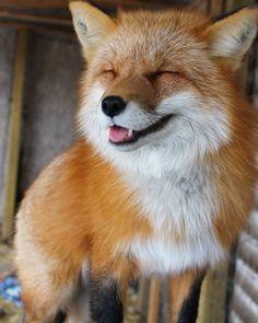Everything Fox - everythingfox: ✌