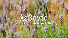🌿 Όλοι λατρεύουμε τη λεβάντα για το υπέροχο άρωμα των λουλουδιών της και τις μοναδικές εντομοαπωθητικές ιδιότητες. Στο σημερινό βίντεο, μαθαίνουμε τα μυστικά για να την καλλιεργήσουμε στον κήπο μας και πώς μπορούμε να τη διατηρήσουμε σε γλάστρα στο μπαλκόνι!