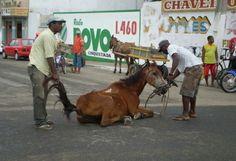 Brazil, Stop the Use of Horses in our City Prefeitura Municipal de Jequié: Dr. Tânia Diniz Correia Leite de Britto, Prefeita de Jequié Bahia, proiba o uso de carroças em nossa cidade....