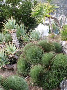 Un jard n des rtico en palm springs cacti and gardens - Jardin exotique d eze mulhouse ...