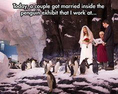 Smile and wave boys, smile and wave // funny pictures - funny photos - funny images - funny pics - funny quotes - Places To Get Married, Got Married, Getting Married, Smile And Wave, Just Smile, Weekender, Penguin Wedding, Funny Animals, Cute Animals