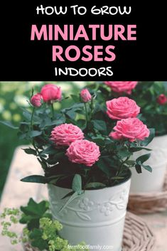 guide to growing these popular plants indoors., A guide to growing these popular plants indoors., A guide to growing these popular plants indoors. Hydroponic Gardening, Organic Gardening, Container Gardening, Gardening Tips, Indoor Gardening, Flower Gardening, Vegetable Gardening, Hydroponics, Rose Plant Care
