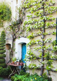 TARA DILLARD: Garden Design: Aging in Place...Love this philosophy...