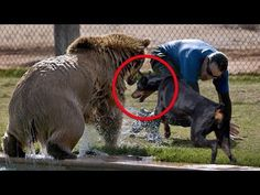Top 5 visits to the zoo that went wrong. - YouTube