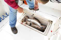 #swag #swagger #swaggerfishing #swagger fishing #fish #fishing #mahi #mahimahi #dolphin #sailfish #marlin #white marlin #miami #bahamas #florida #islamorada #florida keys #ocean #saltwater #saltwater fishing #outdoors #nature #boat #boat life #yacht #yacht life #catch and release #catchandrelease #natgeo #sea #marine #billfish #hunting #bait #squad #fishscale #popout #chicago #trout #salmon #steelhead #rainbow trout