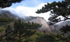 Ялтинский горно-лесной природный заповедник, основанный на территории бывшего Ялтинского лесного хозяйства в 1974 году, расположился к северу от Ялты. Его территория протянулась от Гурзуфа до Фороса. На севере границу заповедника замыкают плоские вершины Крымских гор. Сам� Grand Canyon, Mountains, Nature, Travel, Naturaleza, Trips, Traveling, Nature Illustration, Tourism