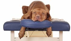 7 Ideas on How To Relieve Stress in Dogs