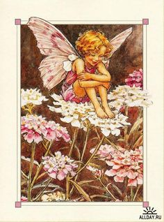 """Candytuft Flower Fairy Cicely Mary Barker, Illustrator from her book, """"Flower Fairies of the Summer"""", 1925 Cicely Mary Barker, Fairy Pictures, Vintage Fairies, Ouvrages D'art, Love Fairy, Art And Illustration, Beautiful Fairies, Flower Fairies, Fairy Art"""