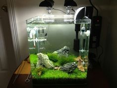 Nature aquascape will make you calm and confortable,...