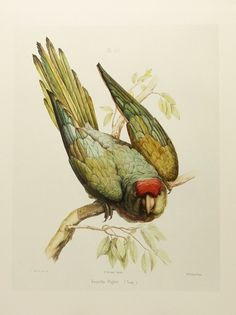 vintage bird illustrations -