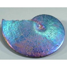 Beautiful opalized ammonite fossil found in the hills of North Dakota.