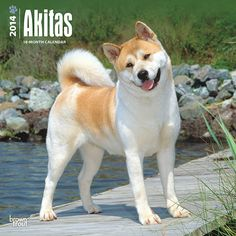 Akitas Wall Calendar: The Akita is officially recognized as a national treasure in Japan. To the Japanese, these powerful and alert dogs symbolize health, happiness and a long life. Helen Keller introduced the first Akita to the United States. Admired for their devotion and courage, they are also exceptionally clean dogs. http://www.calendars.com/Akitas/Akitas-2014-Wall-Calendar/prod201400003718/?categoryId=cat10144=cat10144